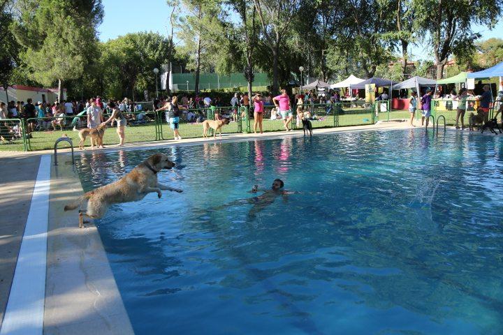 Al agua patas 2016 aristopet for Piscinas con patas