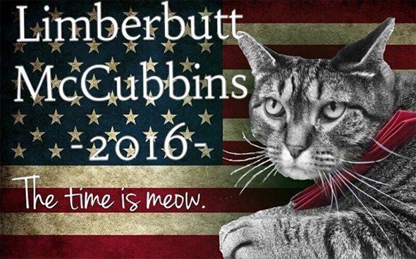 gato_presidente