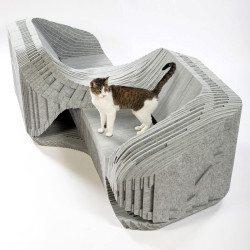 casa-arquitectos-gatos-aristogatos-4