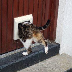 puertas-para-gatos-aristogatos-aristopet-3