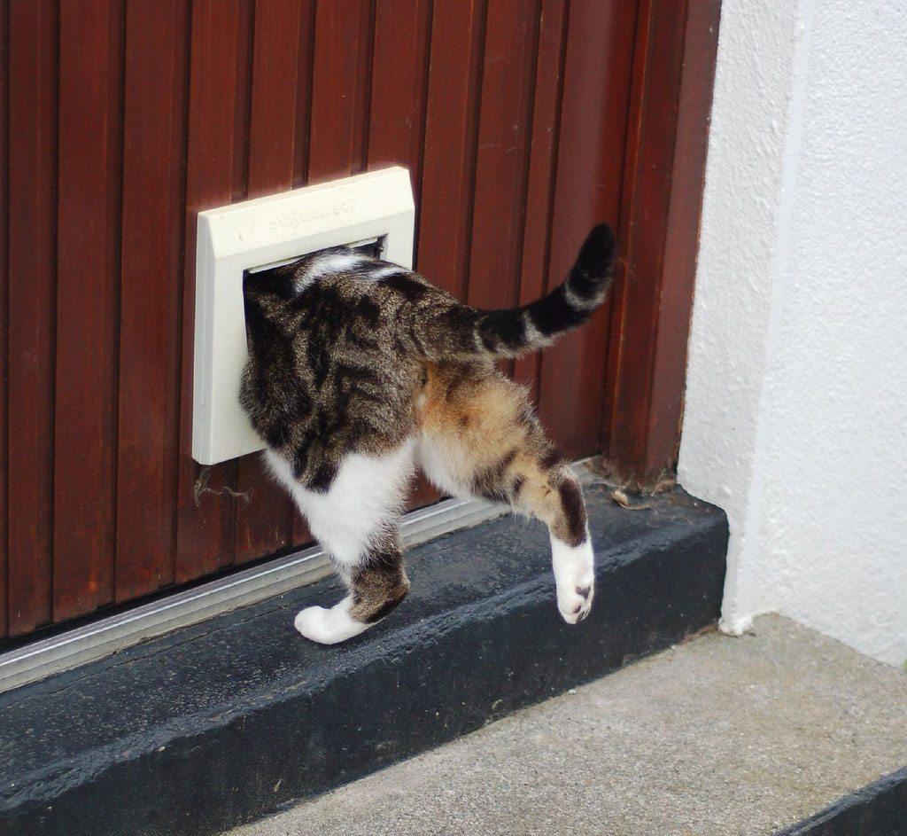 Qui n invent la puerta para gatos aristopet for Puertas para animales