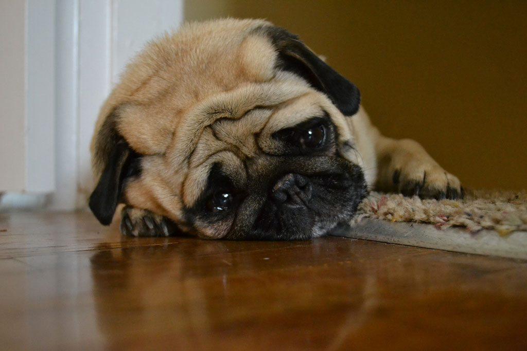 Resultado de imagen para perro estresado