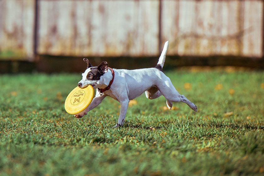 10-cosas-que-tu-perro-quiere-que-sepas-aristopet-1