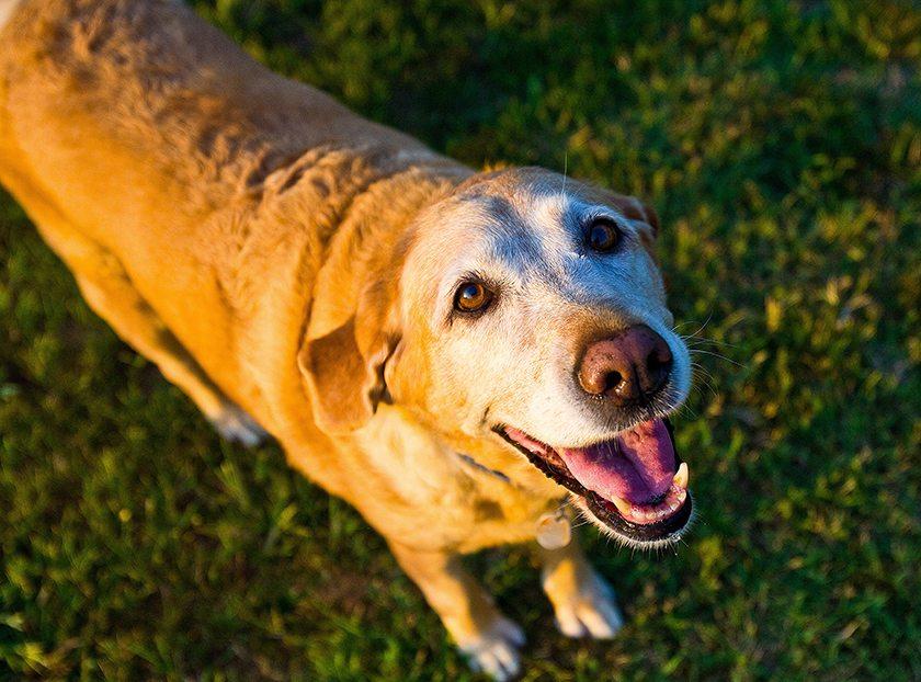 10-cosas-que-tu-perro-quiere-que-sepas-aristopet-2