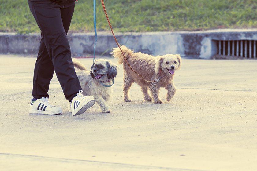 10-cosas-que-tu-perro-quiere-que-sepas-aristopet-4