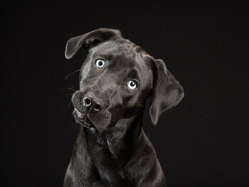 sindrome-del-perro-negro-the-black-dog-project-aristopet-2