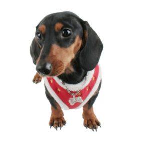 ap63112_6-arnes-navideo-para-perros