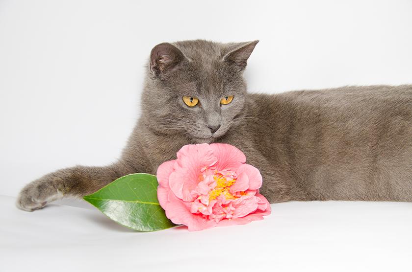 Plantas y flores t xicas para nuestros aristogatos aristopet for Plantas toxicas gatos