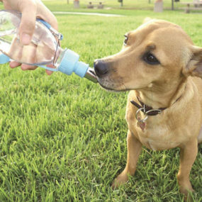 Botella bebedero de viaje para perros AP2288_1