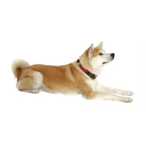 Collar Travell para perros grandes AP11186_1
