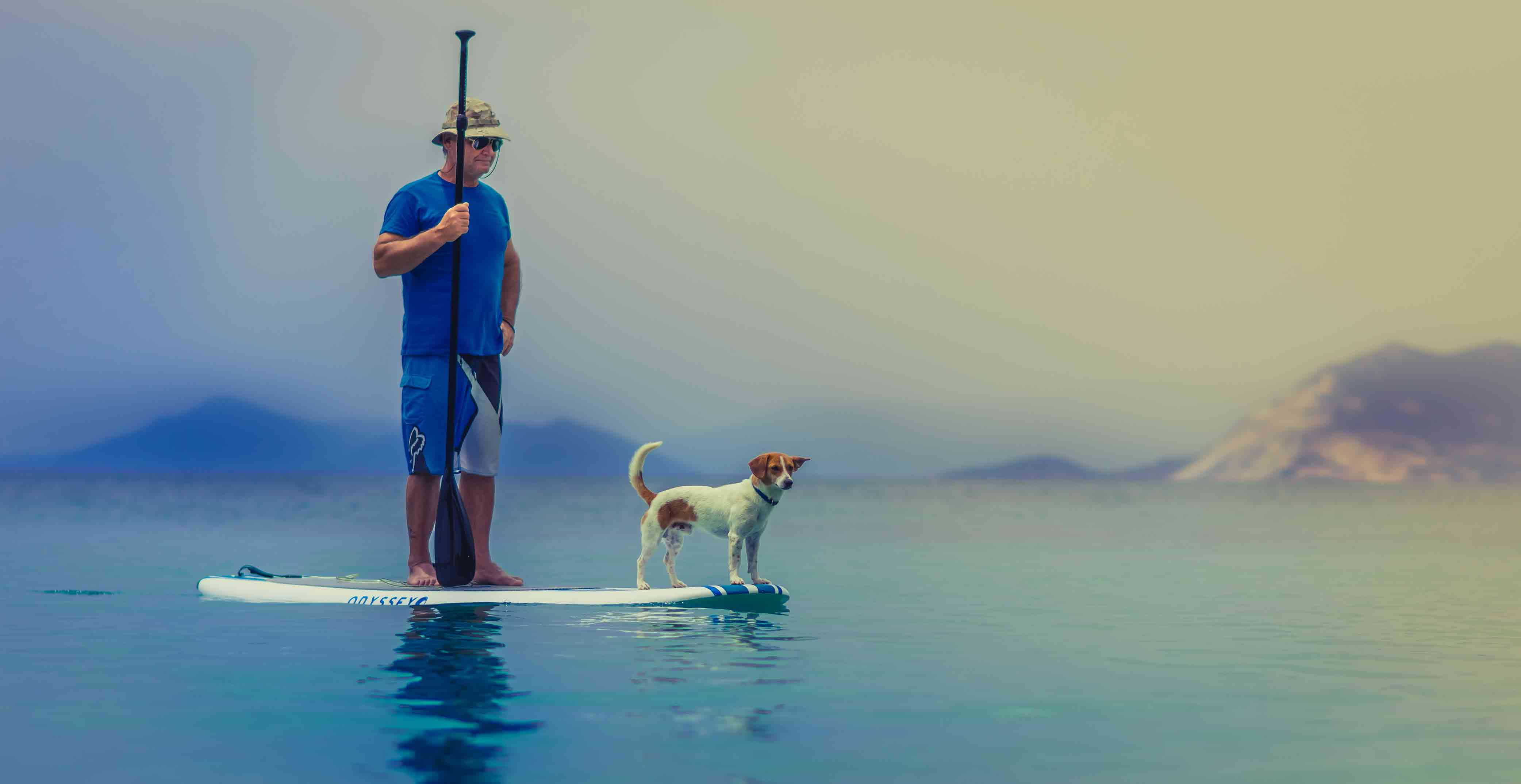 perro-surf