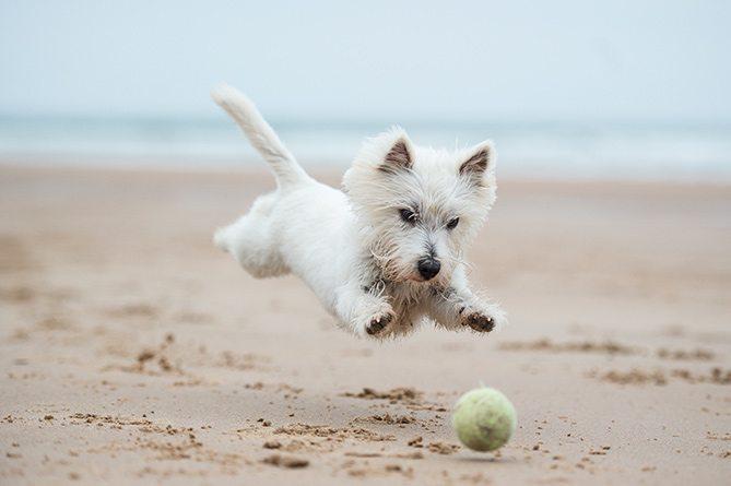 perro-jugando-en-la-playa
