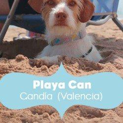 perro-playa-portada-can