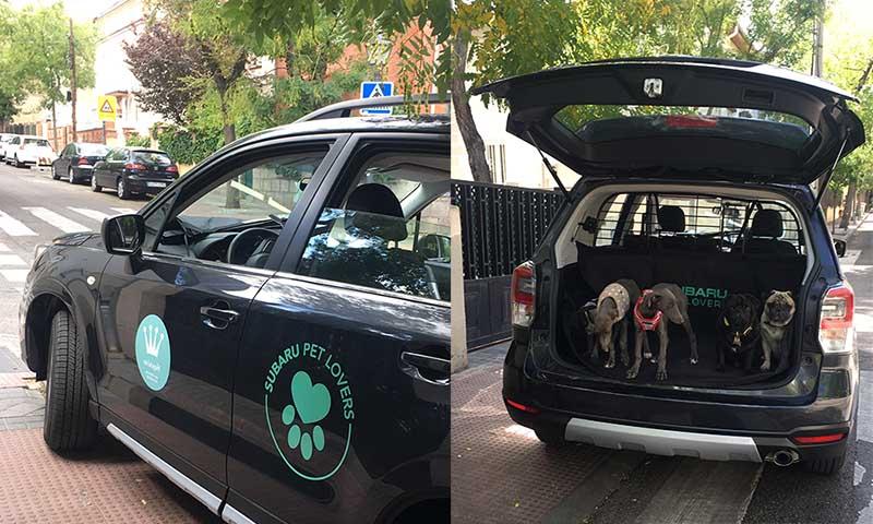 Subaru + perros