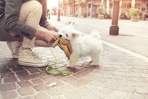 Perro en calle
