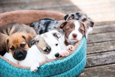 Miami-cachorros