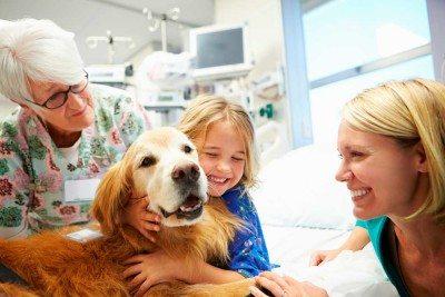 perros-hospitales