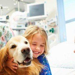 perros-hospitales-facebook