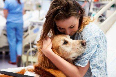 perros-hospitales-niños