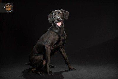 sindrome-del-perro-negro-the-black-dog-project-aristopet-1