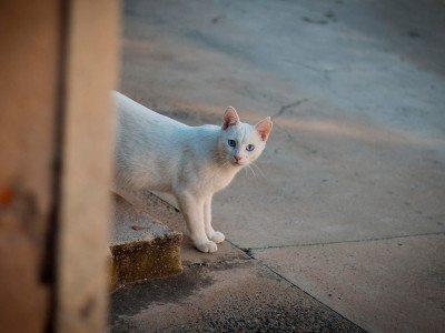 cat-street-friendly
