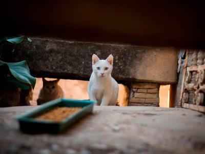 elche-cat-street-friendly