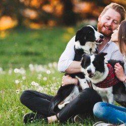 facebook-condicionamiento-perros