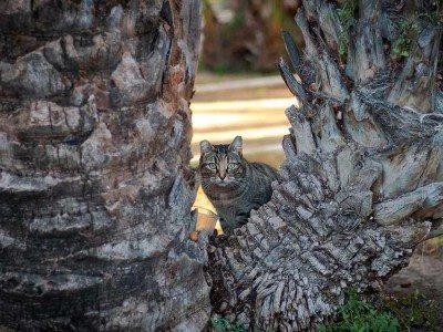 gatos-elche-street-friendly