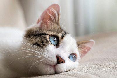 terapia-para-mascotas