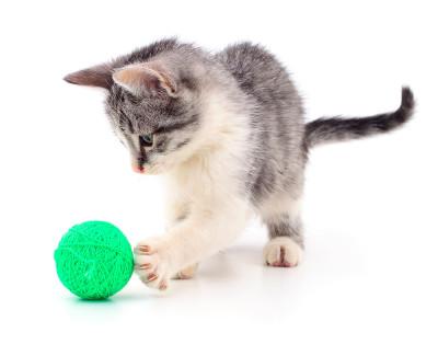 gatos-diestros-zurdos