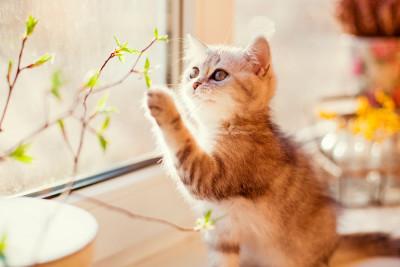 gatos-zurdos-diestros