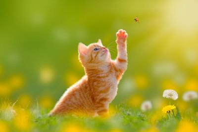 gatos-zurdosdiestros