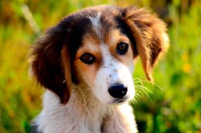 mascotas-perdidas-perro