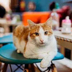 facebook-gato-bar