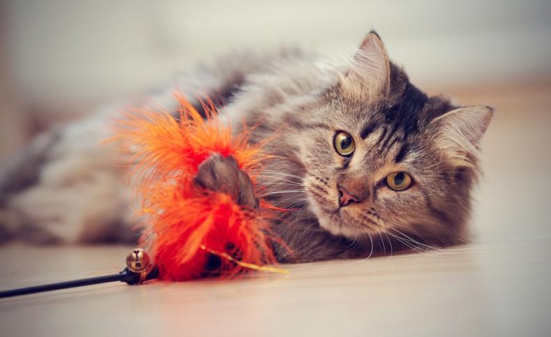gato juguete 2