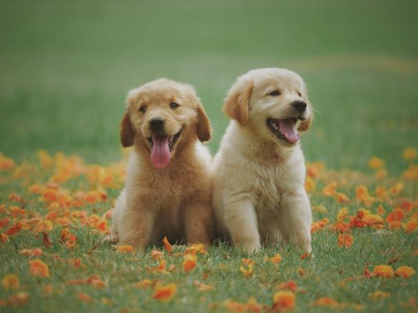 uk-prohibe-venta-cachorros-aristopet
