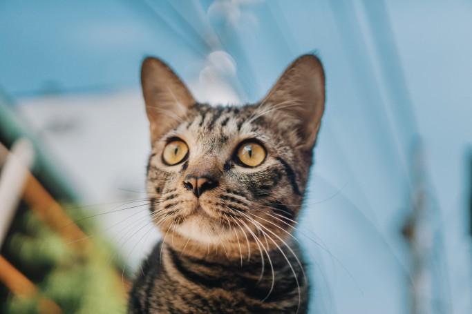 adorable-animal-cat-1038914