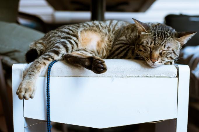 animal-animal-photography-cat-998242