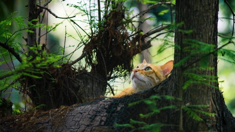animal-beautiful-cat-1000593