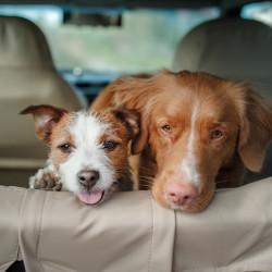 destacado-viajar-perro-coche