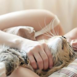 listado-gatos-dormir-contigo