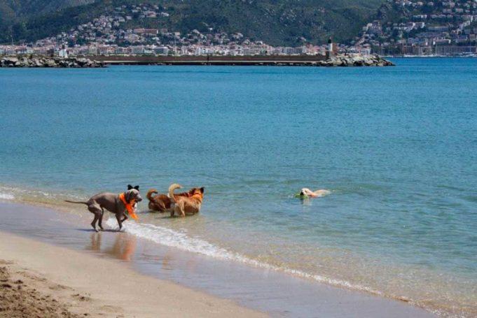 Playas para perros 2019: GERONA