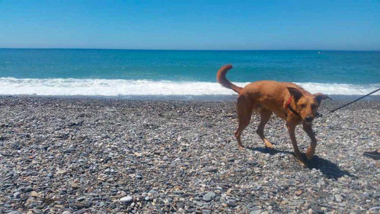 Playa para perros 2019: GRANADA