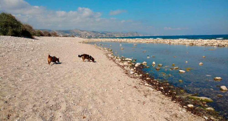 Playas para perros 2019: ALICANTE
