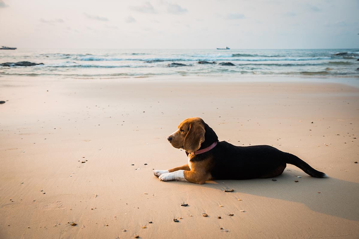 aristopet-playas-para-perros