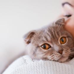 destacado-como-cuidar-a-un-gato