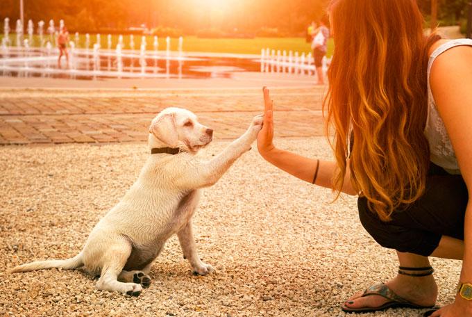 perro-cachorro