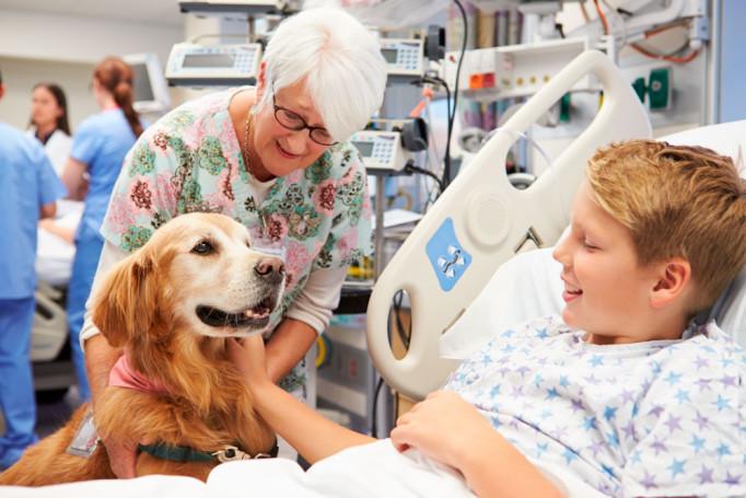 perro-visita-hospital
