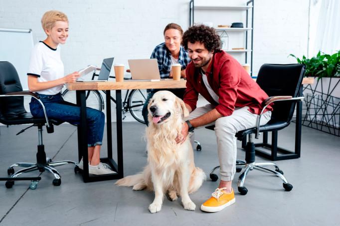 trabajo-mascotas