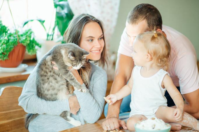 familia-gatos